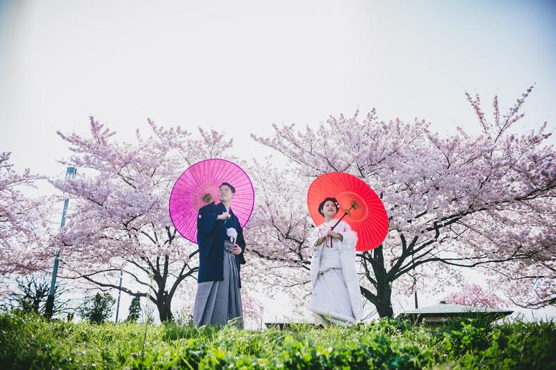 白無垢を着て桜の中前撮りをされた先輩花嫁さま